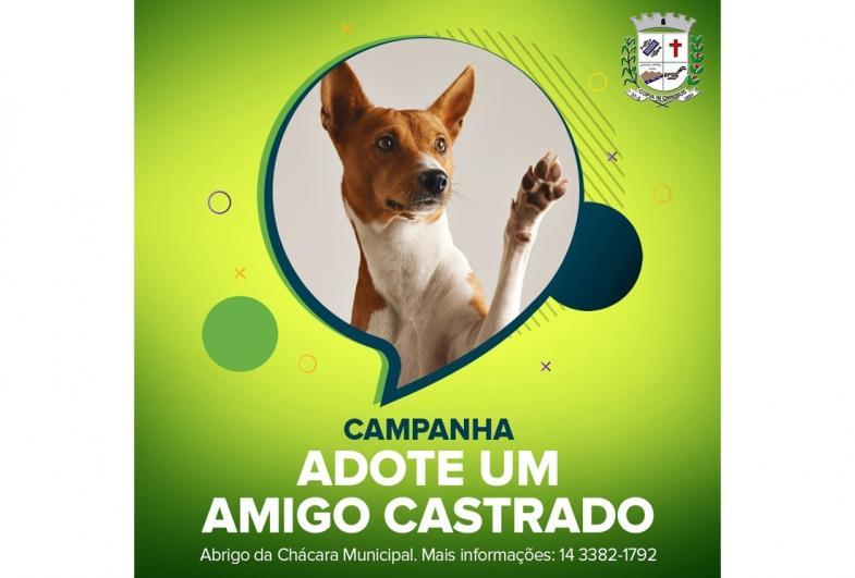 Abrigo Municipal promove adoção de animais castrados