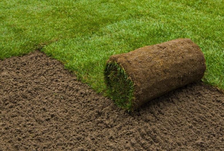 Prefeitura de Avaré deve gastar cerca de R$ 250 mil com compra de grama, com plantio e adubo