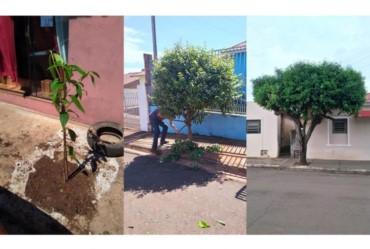 Taguaí realiza serviços de poda, corte e plantio de árvores