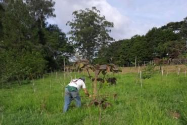 Modelo de Avaré passa por processo de restauração florestal