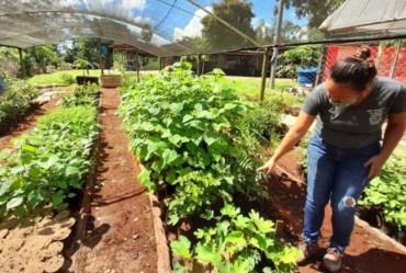 Coordenadoria de Agricultura e Meio Ambiente fornece mudas para recuperação de nascentes