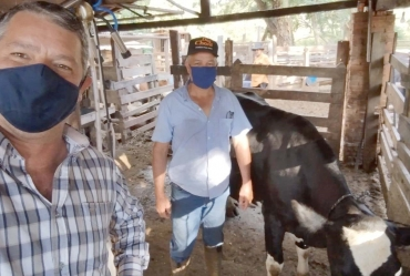 Programa de Inseminação Artificial auxilia produtores rurais