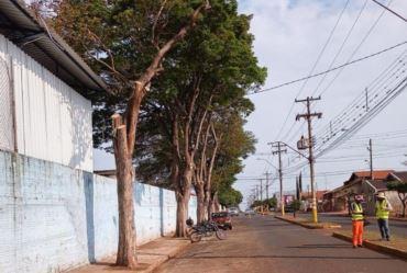 Defesa Civil realiza poda de árvores no centro de Taquarituba