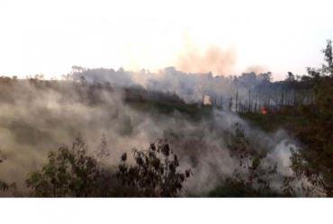 Fogo atinge área de mata e mobiliza bombeiros em Avaré